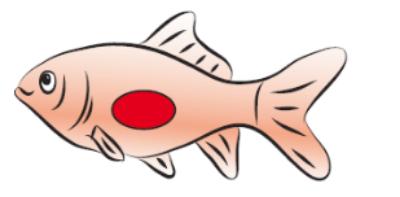 Schwimmen und Sinken, Wie steigt der Fisch auf?