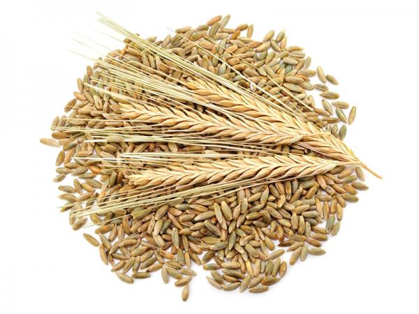 5 kg Getreide von der Davert Mühle